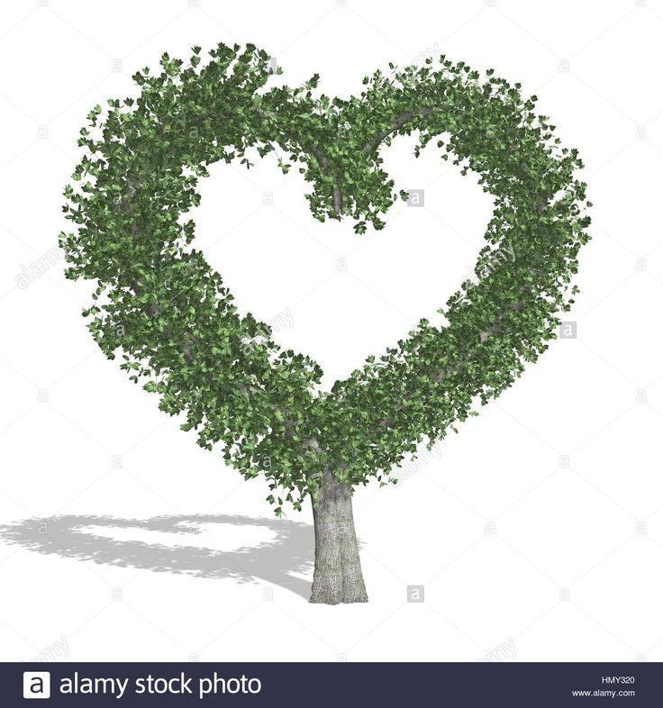 Szív fa, elszigetelt fehér háttérrel.  Stock fotó