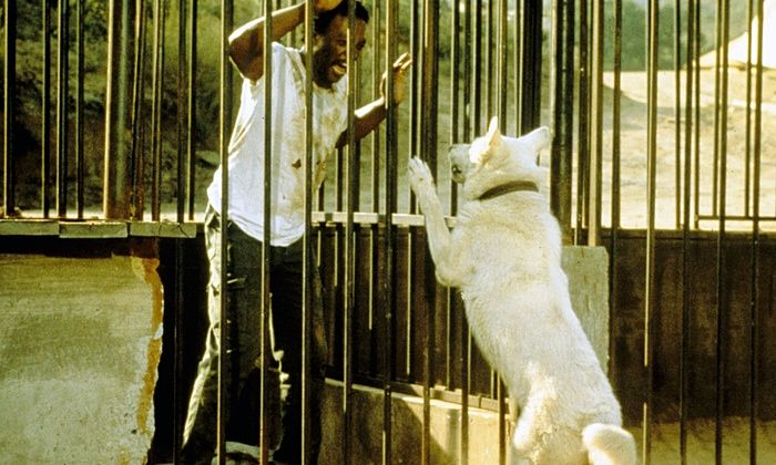 Paul Winfield with the titular white dog in Samuel Fuller's 1982 allegory.