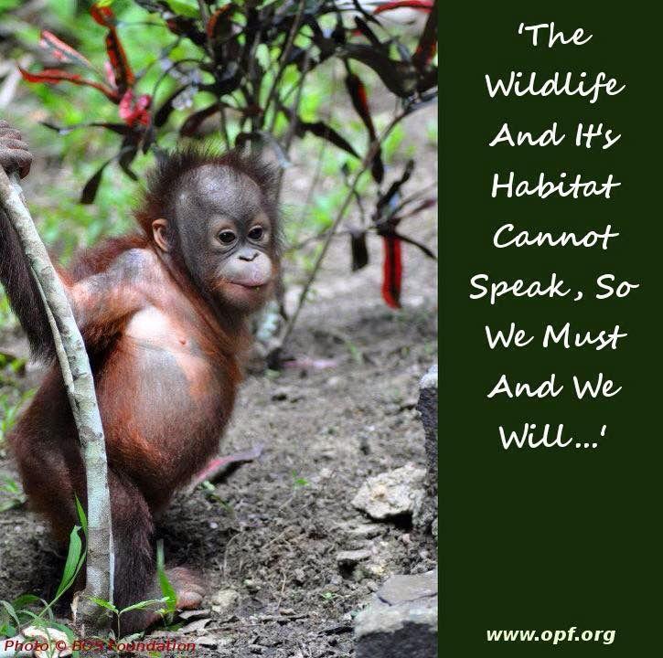 Orangutan Protection Foundation