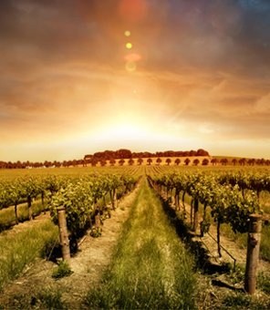 As autumn brings a slight chill to the U.S., head to Australia's Barossa Valley…