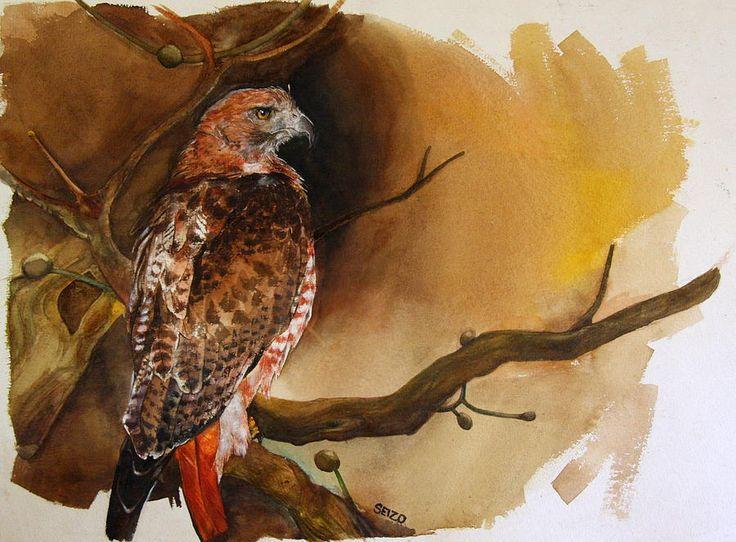 Hawk painting watercolor - photo#55