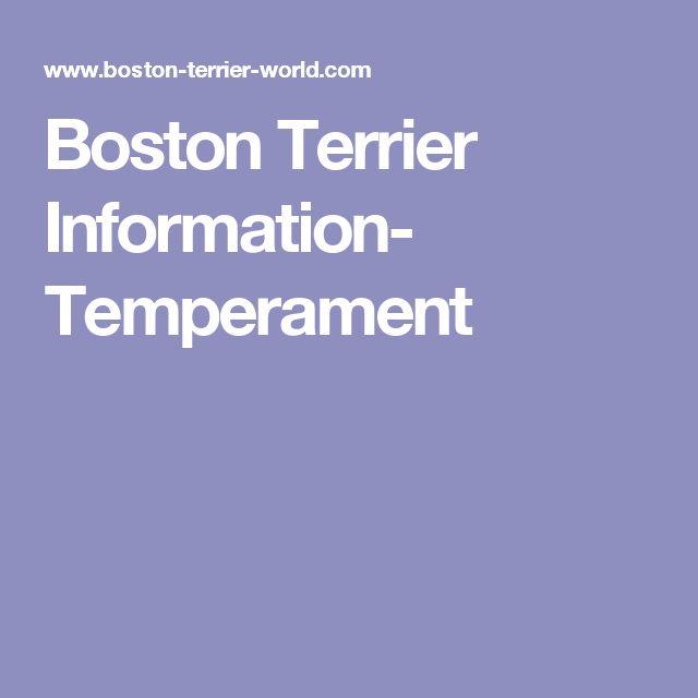 Boston Terrier Information- Temperament