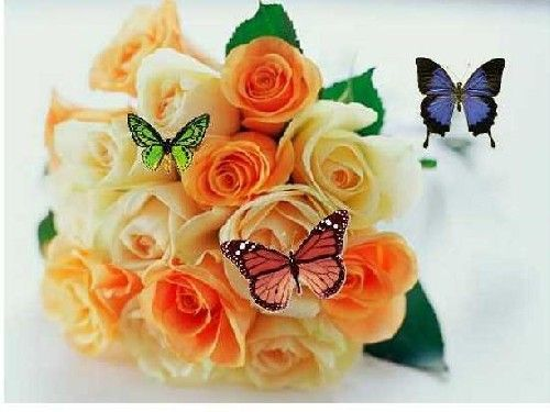 Animated Flowers And Butterflies Animated Butterfly