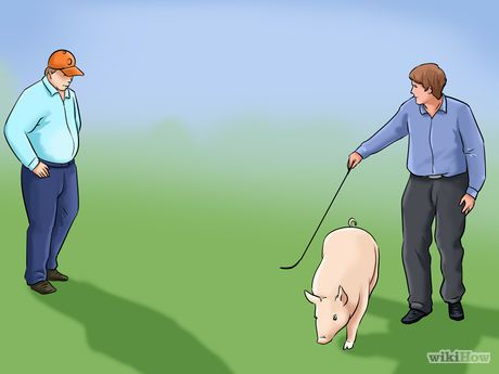 How to show a pig step by step