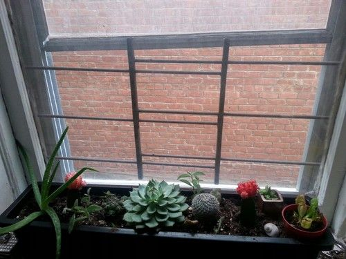 Windowsill succulents, gorgeous colours, get some green in your room!