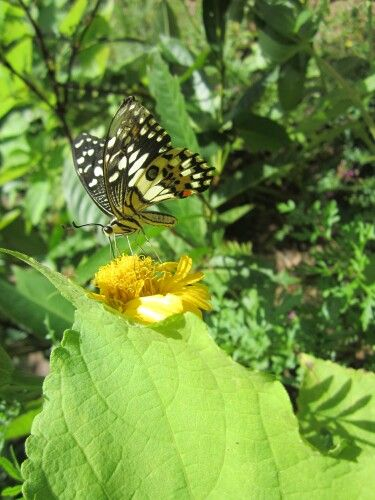 Butterfly Park, Siem Reap, Cambodia