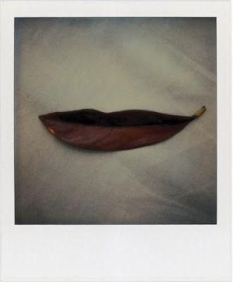 Magnolia, Markus Raetz.