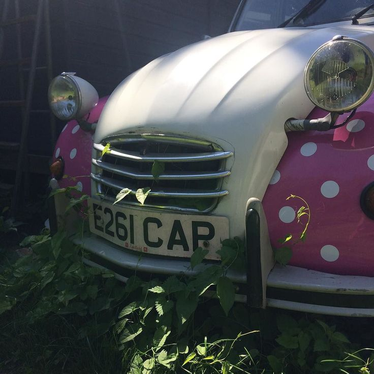 Sat still for a week & the bindweed is taking over!! #citroen #2cv #dolly #polkadots #sussexpoultry