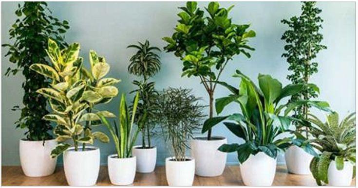 Utazni készülsz, de nincs aki öntözze a szobanövényeidet? Ez a módszer a segítségedre lehet!