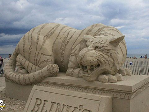 """""""Tiger"""" was sculpted by Carl Jara at Hampton Beach, New Hampshire, out of manufactured sand."""