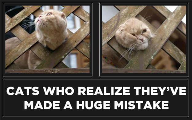 24 Cats Who Realize They've Made A Huge Mistake :: Why is this so funny?!