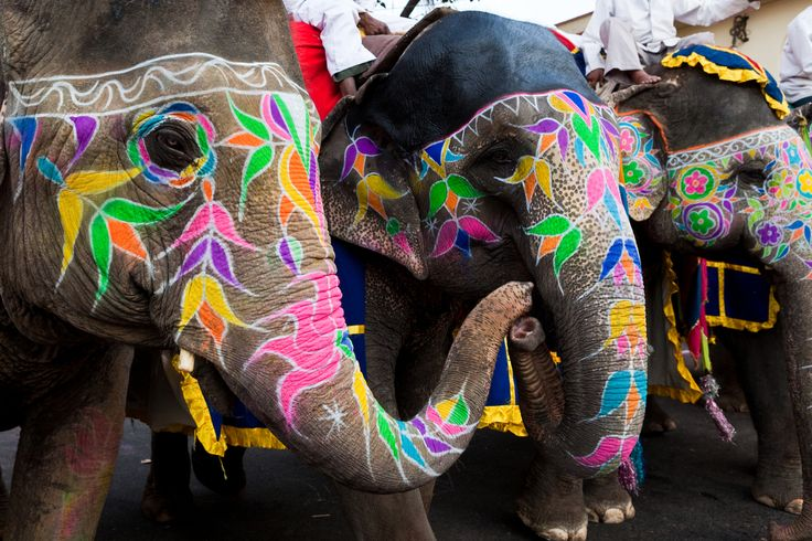 The elephant is a popular and lovable animal albeit rather comical.  There are physical reasons for this of course, but this gentle strong creature has long been a spiritual symbol.  It is unique because it has no natural predators and is a vegetarian so is potentially an animal of peace and divinity and enduring patience.  It is currently the largest living land mammal which lives the longest life span, up to 65 years. In ancient times it was thought to have the magical power to fly an...