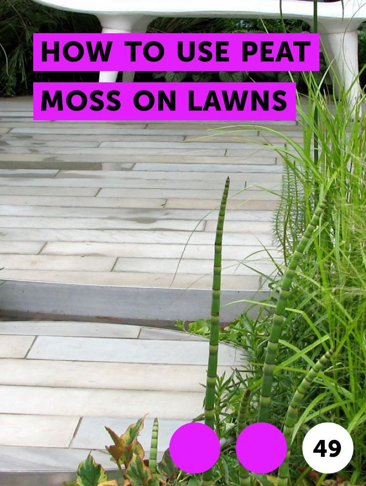 How To Use Peat Moss On Lawns St Augustine Grass Lawn Best Grass Seed