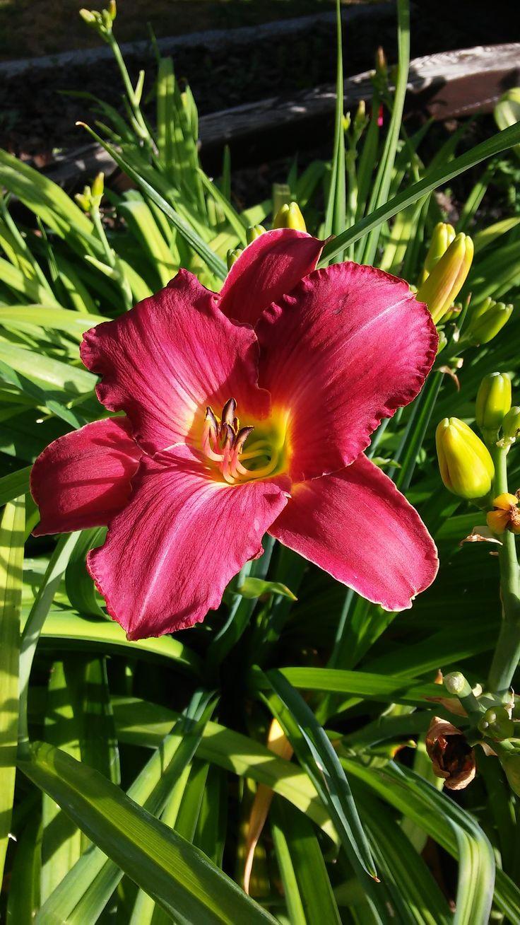 18 best nos fleurs plantes arbres images on for Arbres plantes fleurs