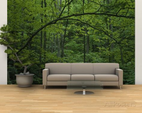 A Lush Green Eastern Woodland View Wall Mural – Large by Bates Littlehales at AllPosters.com