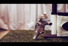Funny Cat & Cute Kittens Fail Videos The Best Funny Kitty Cat Video № 19