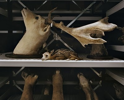 Mounted Life. Stunning Taxidermy Photography By Danielle van Ark.