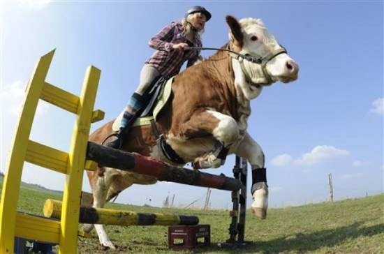 Regina Mayer, a 15-year-old girl from Laufen, Southern Germany, rides her pet cow Luna as if she were a well-trained show horse.