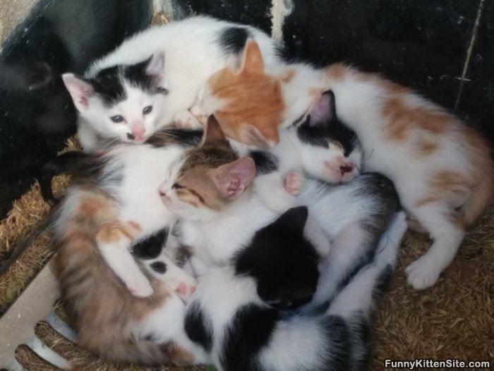 The_Kitten_Pile