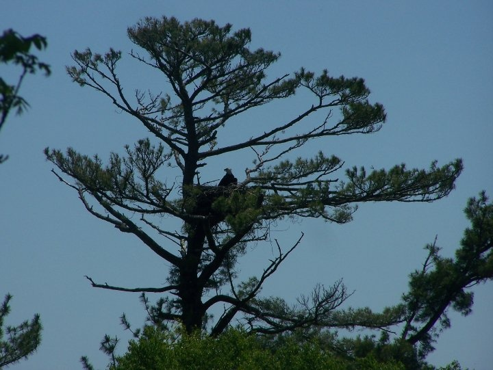 Eagles nest - Behind York Manor Fredericton New Brunswick