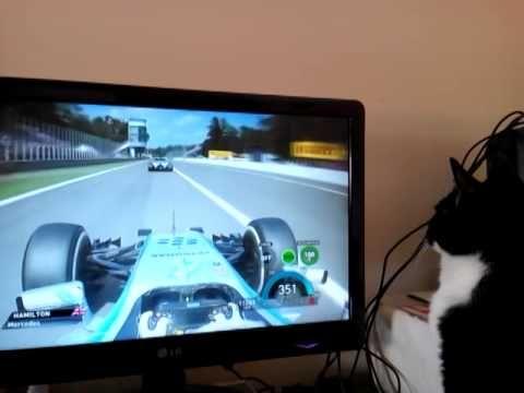 Look at this cat enjoy watching Formula 1 on TV - http://formula1streams.com/look-cat-enjoy-watching-formula1-tv/?snap_src=PN&snap_medm=F1Streams+Pinterest&snap_cpgn=Formula+1+Streams