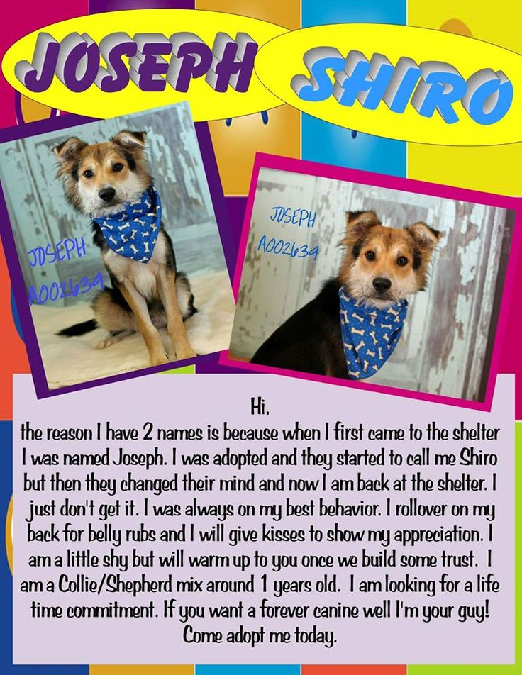 UPDATE Shiro was adopted today, 121114. Merry Christmas