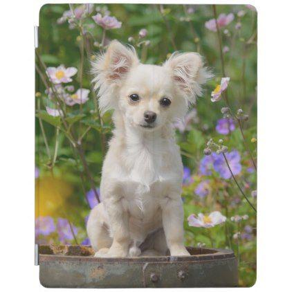 #cute - #Cute longhair cream Chihuahua Dog Puppy Pet Photo iPad Smart Cover