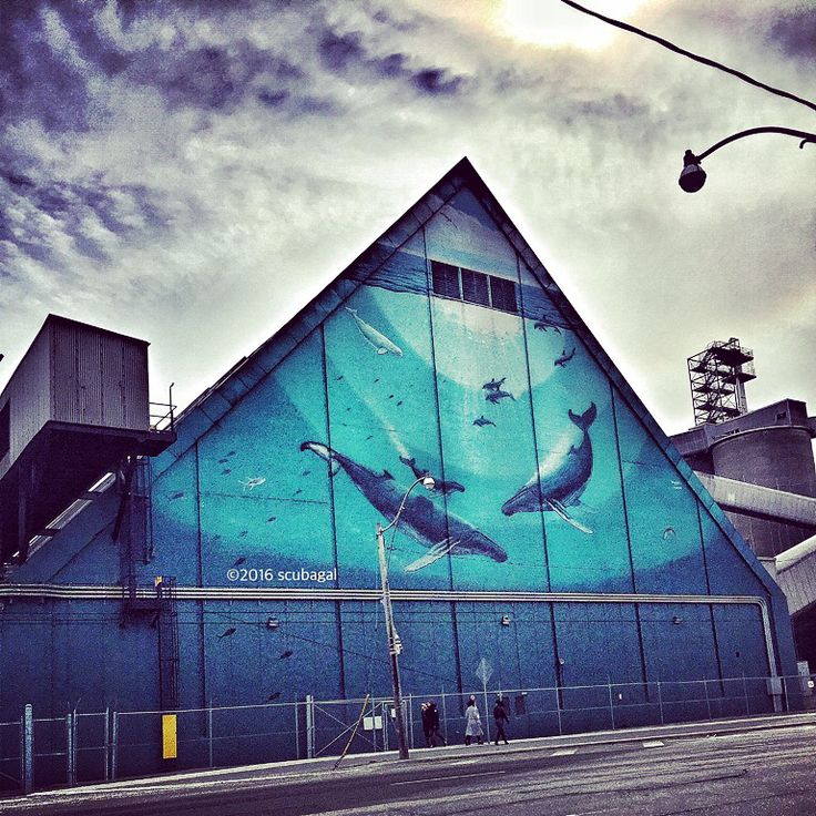 The Only Type of Concrete That Should Hold These Creatures | #art credit by Wyland | #toronto #streetart #streetphotography  #photography #ocean #photography #urbanart
