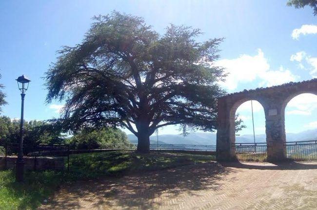 Belvedere Maria Grazia Capulli - Annuncio del Comune di Camerino