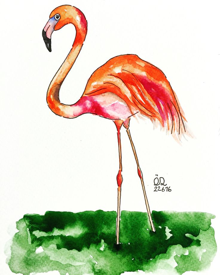 Intelligence without ambition is a bird without wings. Salvador Dali   #flamingo #pinkbird #miami #alliturna #bird #salvadordali #picoftheday #watercolor #wip #suluboya #illustration #myillustration #sketch #illustrationoftheday #likeit #sketchoftheday #sketchbook #sketching #illustrationart #art #artoftheday #artist #artsy #sanat #artofvisuals #gallery #instaart #instaartist #artstagram #trendsSoul