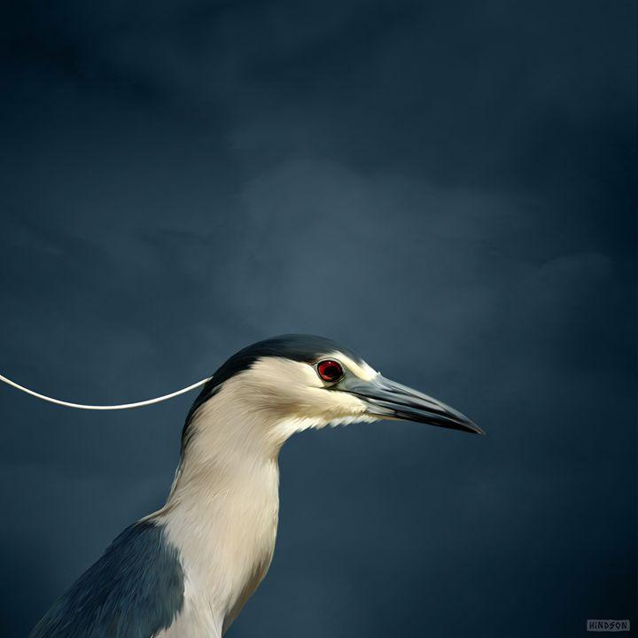 Black Cap Heron - Julian Hindson