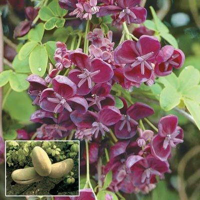 1000 images about garden fruit on pinterest trees and shrubs tree pruning and to grow - Planting fruit trees in the fall a garden full of vigor ...