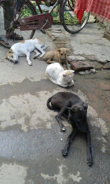 Coexistence, Kolkata, India