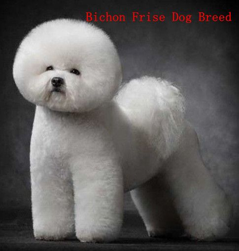 Find The Perfect Dog Breed