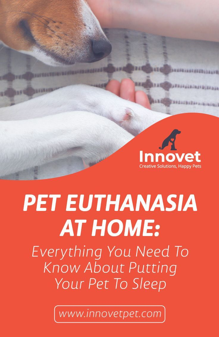 Why You Shouldn T Follow The Instructions For Diy Euthanization At Home Dog Death Animal Euthanasia Happy Animals