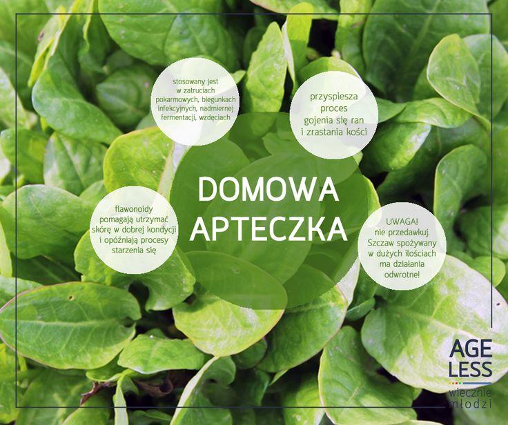 Przedstawiamy Wam kolejnego mieszkańca Zielonej Krainy – szczaw.  Roślina ta, spożywana w umiarze, ma zbawienny wpływ na gojenie się ran, pomaga zwalczyć dolegliwości ze strony układu pokarmowego i utrzymuje skórę w dobrej kondycji. Obowiązkowy składnik zdrowej diety!  #ageless #wieczniemlodzi #wiecznamlodosc #szczaw #warzywa #witaminy www.ageless.pl