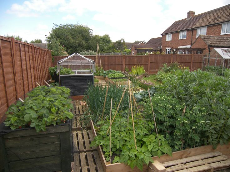 Vegetable Patch, 32 different types of veg and fruit, after a very cold start to this year everything is starting to produce food for the kitchen.