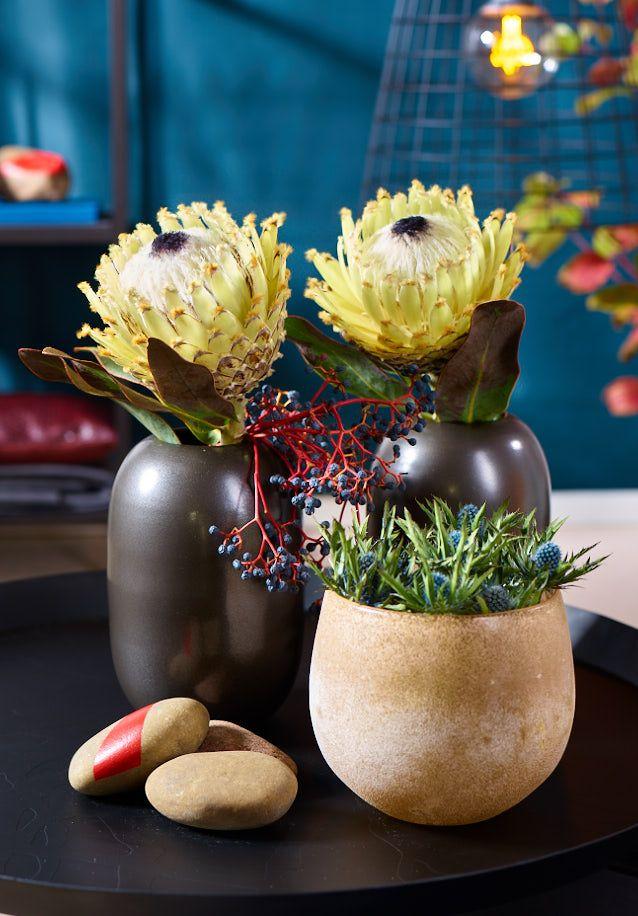 Puristisch und stilsicher sind die zwei Protheen-Ladies in Anthrazit in Szene gesetzt. In den matt-schimmernden Gefäßen ist ihnen unsere ganze Aufmerksamkeit garantiert.   Ein intensives Stillleben mit starken Blumen-Persönlichkeiten.  Einfach in der Gestaltung, effektvoll im Ausdruck.