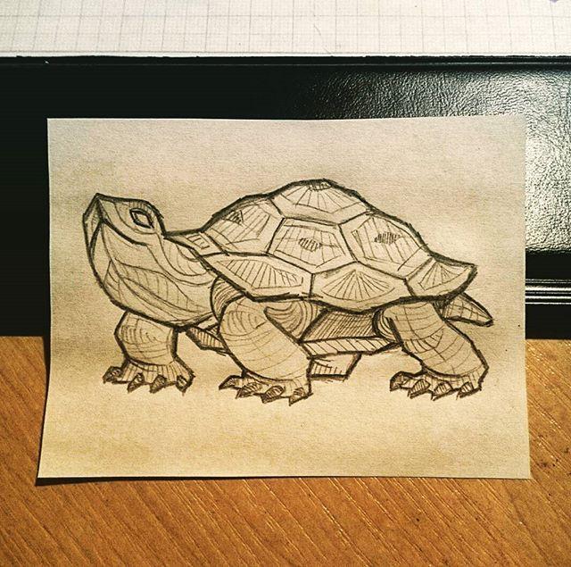 #art #animals #turtle #sketch #pencildrawing #pencil #pencilsketch