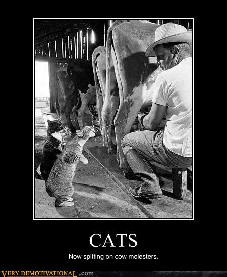 lol catPhotos, Fresh Milk, Cat, Farms, Funny, The Farm, Kitty, Cows, Animal