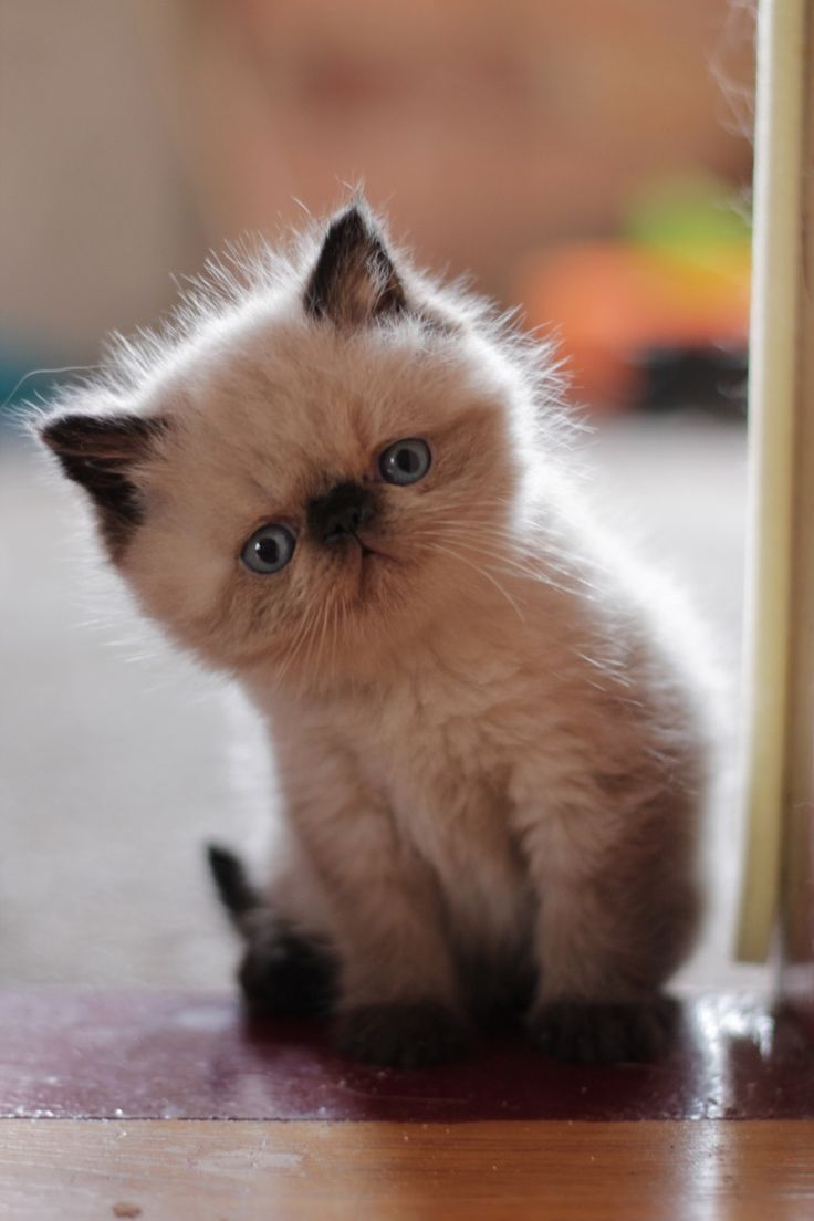 Cute kitten ✿⊱╮