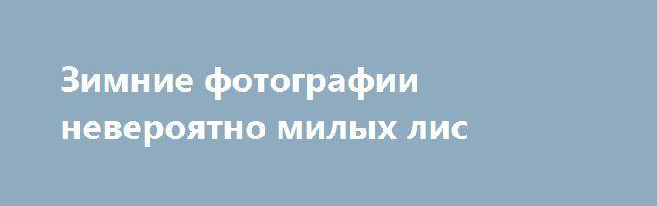 Зимние фотографии невероятно милых лис http://kleinburd.ru/news/zimnie-fotografii-neveroyatno-milyx-lis/  Предлагаем подборку с фотографиями красивых, пушистых и невероятно милых лис. 1. 2. 3. 4. 5. 6. 7. 8. 9. 10. 11. 12. 13. 14. 15. 16. 17. 18. Запись Зимние фотографии невероятно милых лис впервые появилась Zefirka.   Источник » Зимние фотографии невероятно милых лис