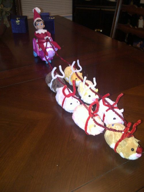 """Elfie was missing the North Pole and decided to find some """"reindeer"""" of his own and go for a sleigh ride!"""
