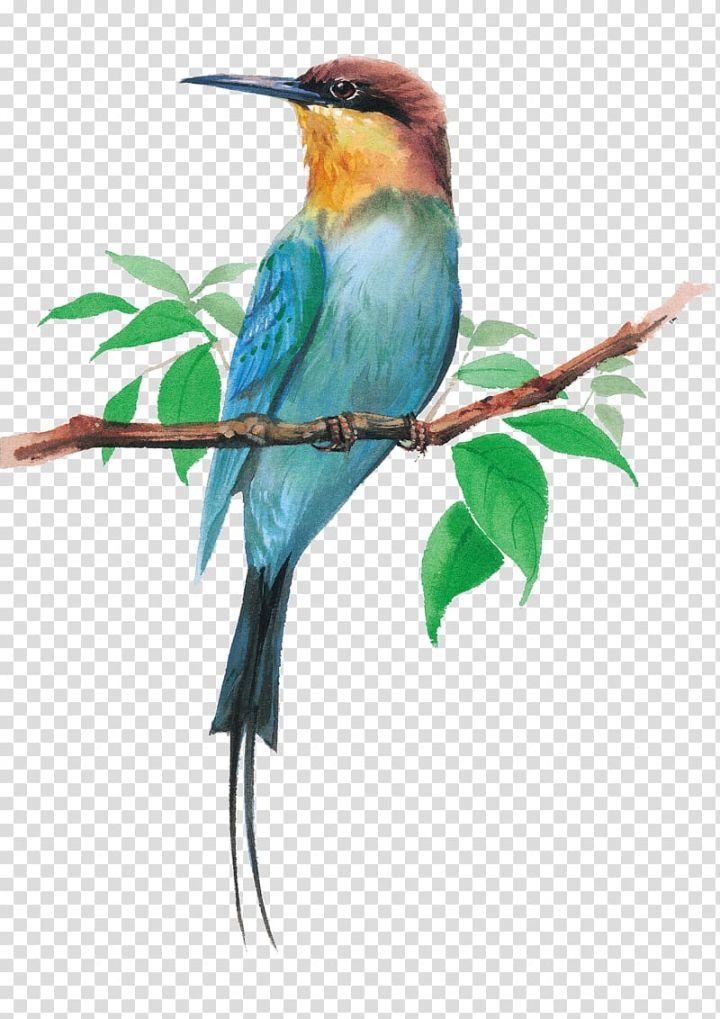 Animal clip art Watercolor bird illustration Dark colored birds clipart