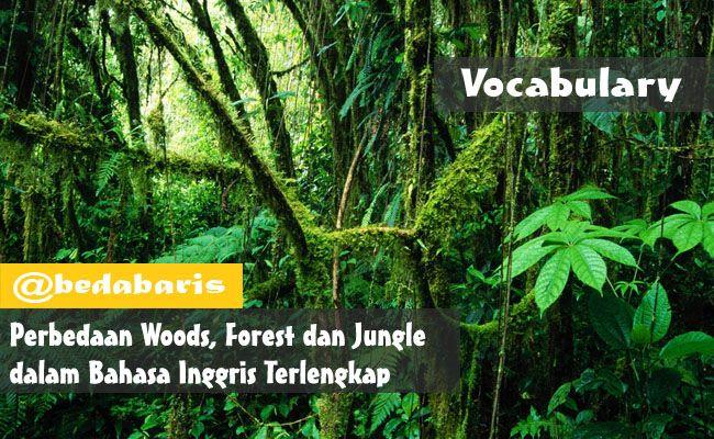 Perbedaan Woods, Forest dan Jungle dalam Bahasa Inggris Terlengkap  http://www.belajardasarbahasainggris.com/2017/05/01/perbedaan-woods-forest-dan-jungle-dalam-bahasa-inggris-terlengkap/