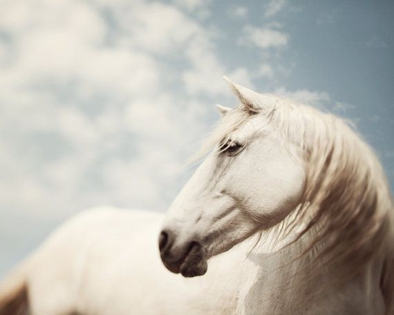 A cure for hiccups.  Wild is the Wind - Fine art horse photograph - White horse of the Camargue, France on Etsy