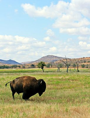 Wichita Mountains Wildlife Refuge, Lawton Oklahoma - went many times as a little kid. Can't wait to take my rugrat someday