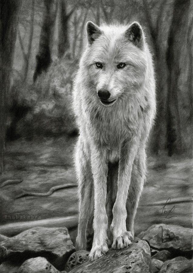 wolves drawing - Google zoeken