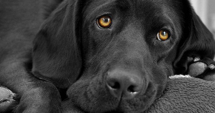 Fekete kutya nevek http://www.kutyazona.hu/fekete-kutya-nevek/
