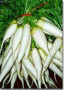 http://ayurvedicaushdhi.blogspot.in